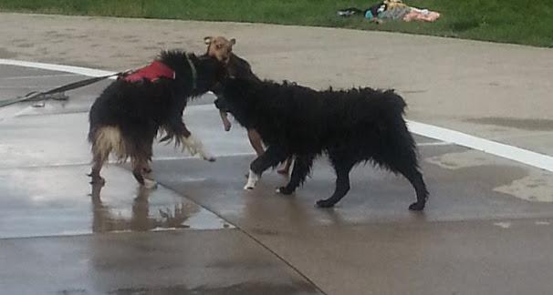 Bella at Doggie Dive
