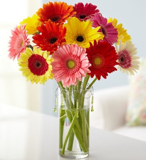 A Bouquet of Gerbera to Share, Along with My Vocational Assessment Services
